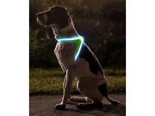Светящаяся амуниция для вечерних прогулок
