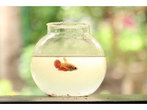 Обустройство аквариума для одной рыбки